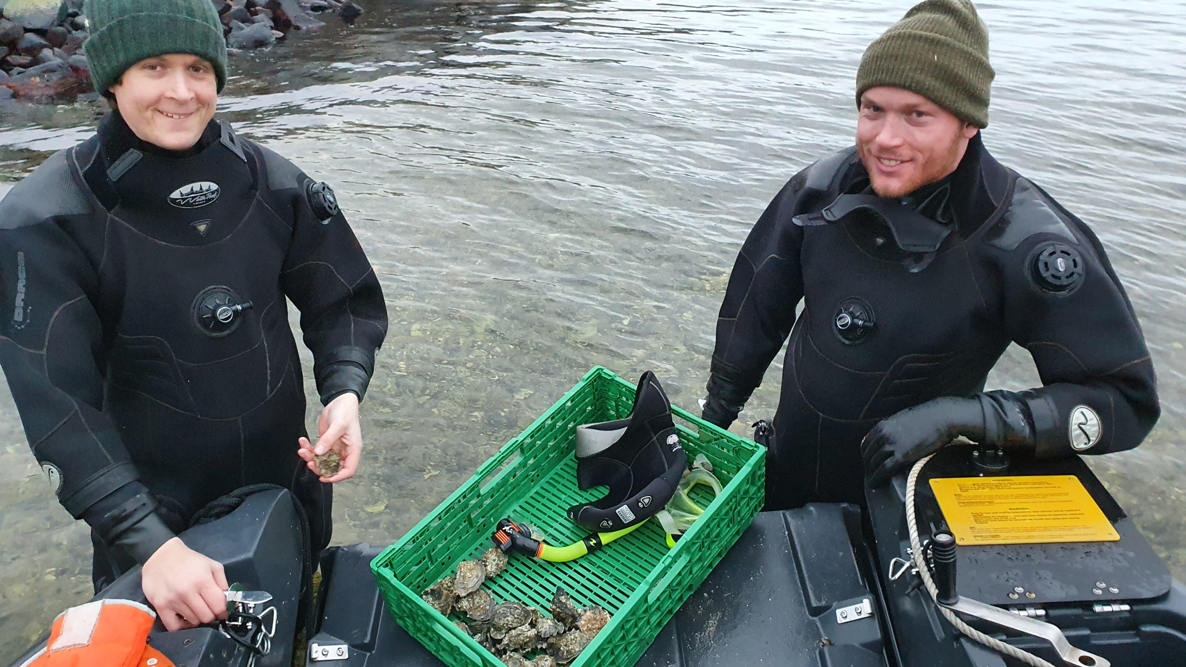 Henrik Adolfsen og Jørgen Adolfsen hos Storm Østers sanker østers med dykkerdrakt og snorkel.