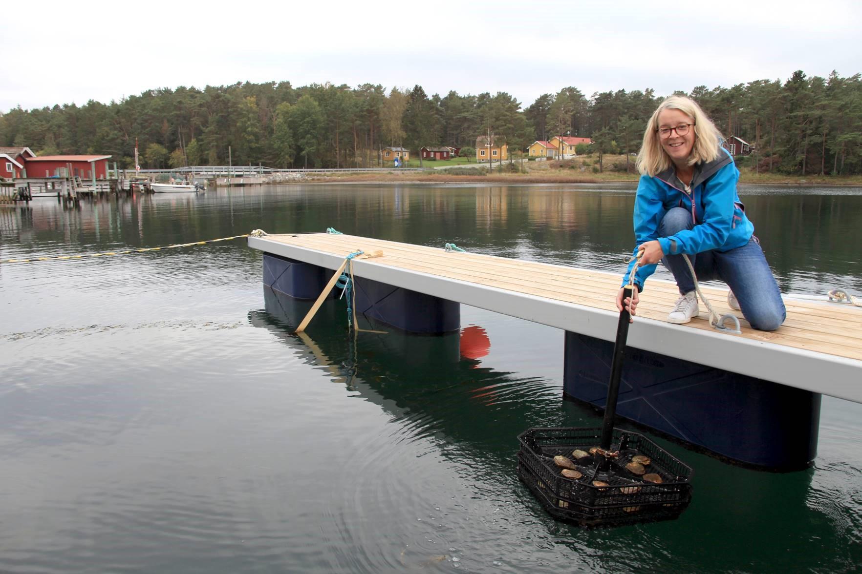 Marina kolonilotte foto Susanne Liljenström