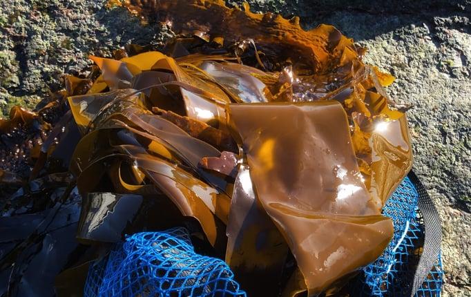 Tångpaddling 1 mindre Foto Catxalot