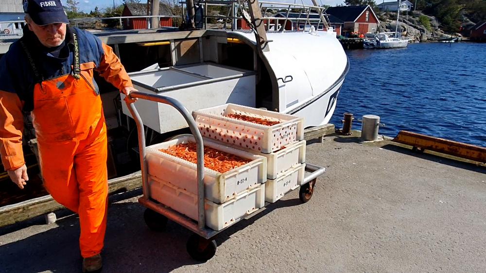 Utgårdskilen: Utfordret fiskerinæring med solide ringvirkninger