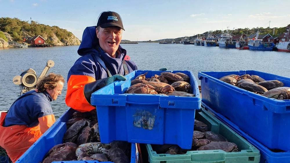 Satser på sterk vekst med bærekraftig krabbefiske