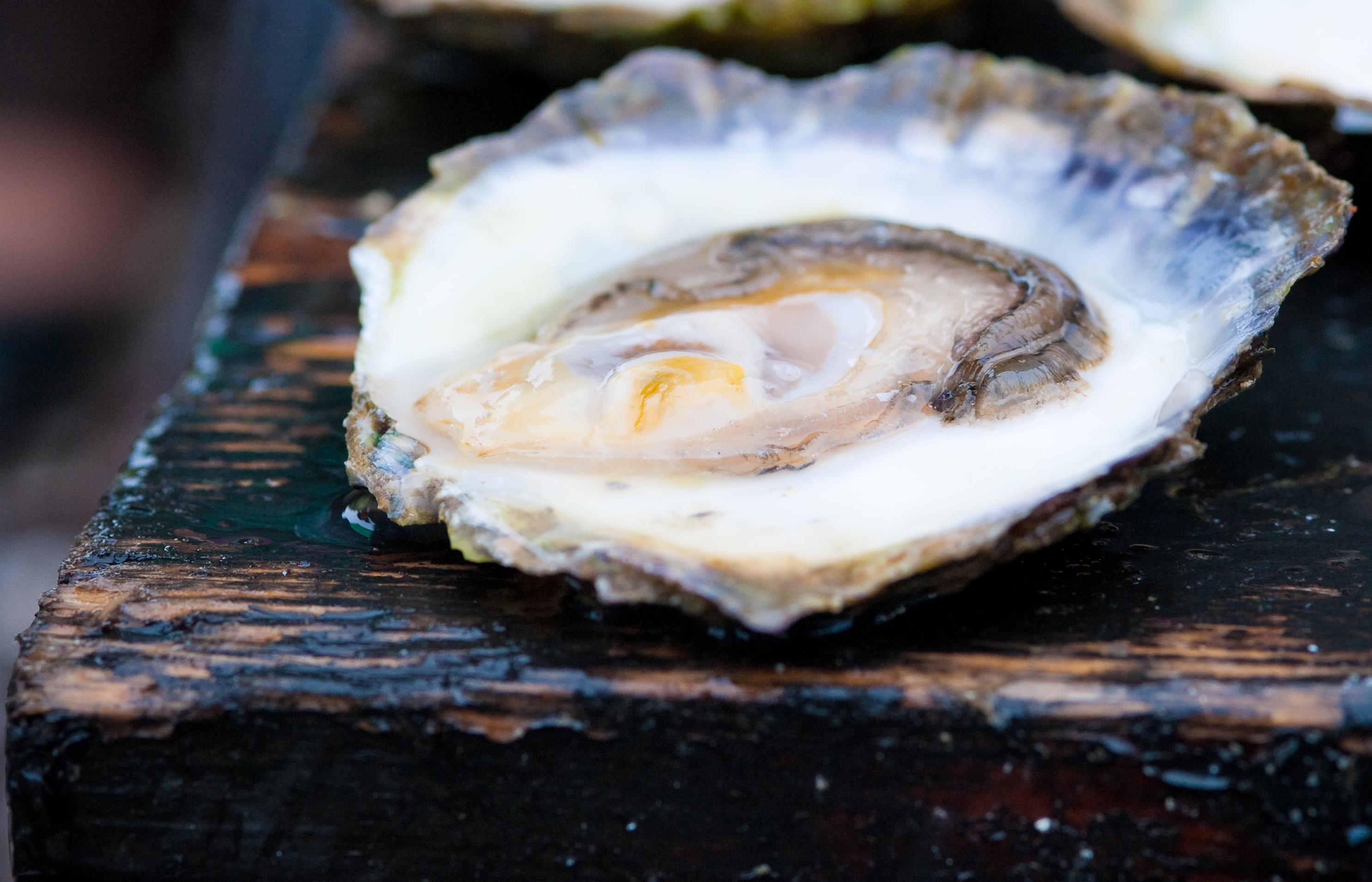 Ostrea Aquaculture sjösätter större odling utanför Koster