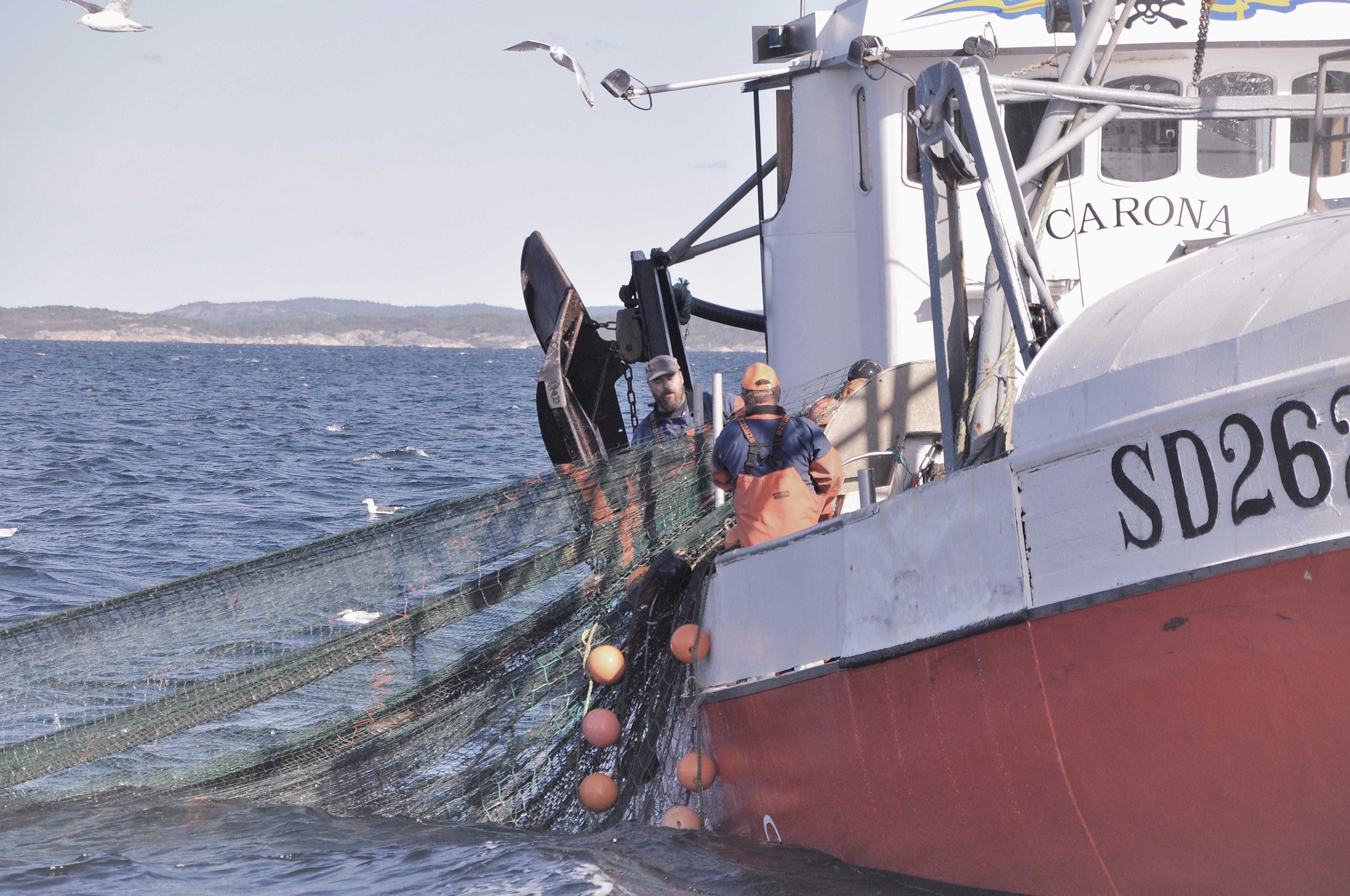 De bästa skaldjuren finns hos oss!