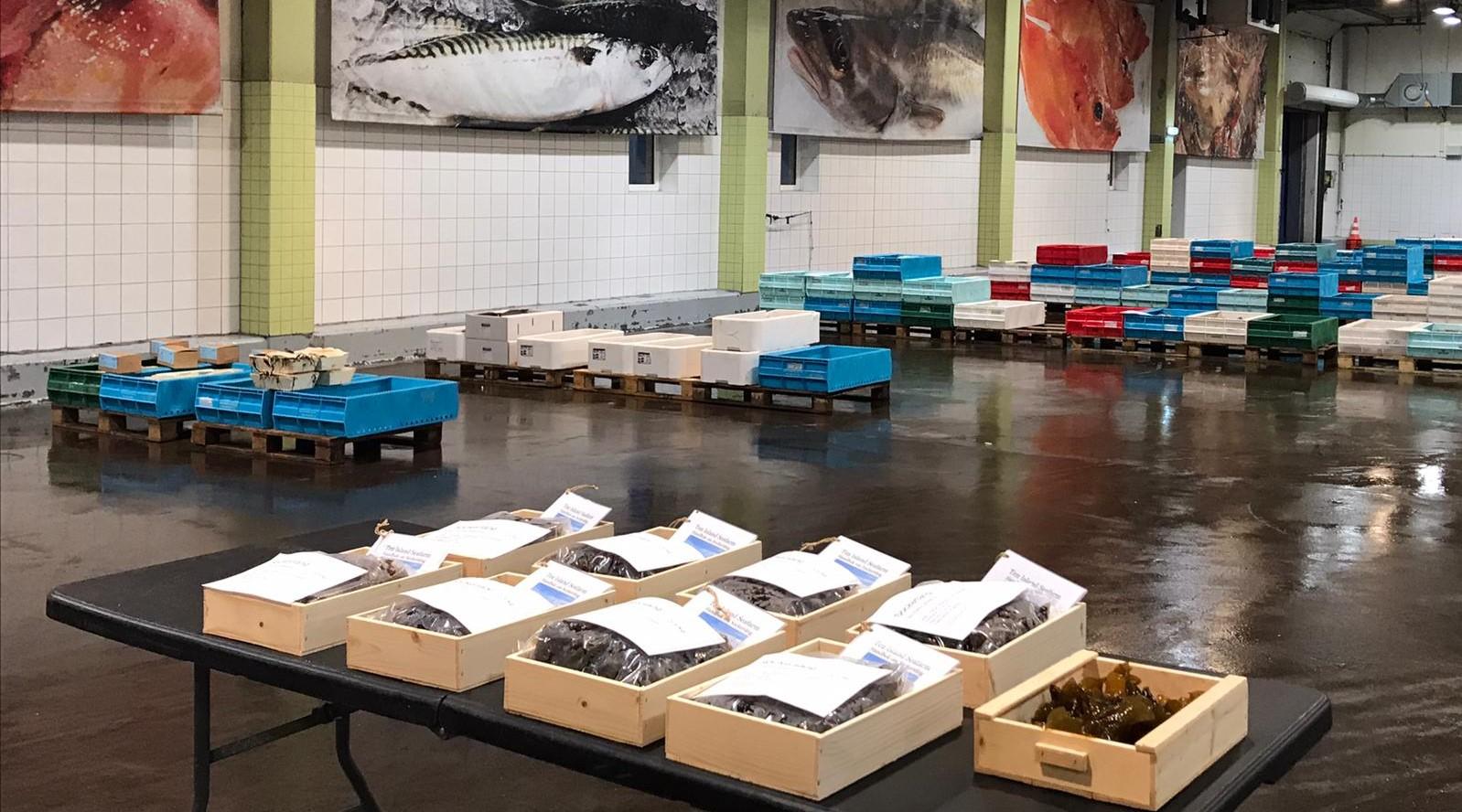 Premiär för tång på Göteborgs Fiskauktion